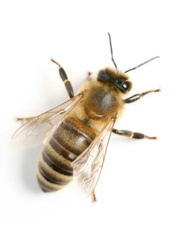 Beekeepers bee