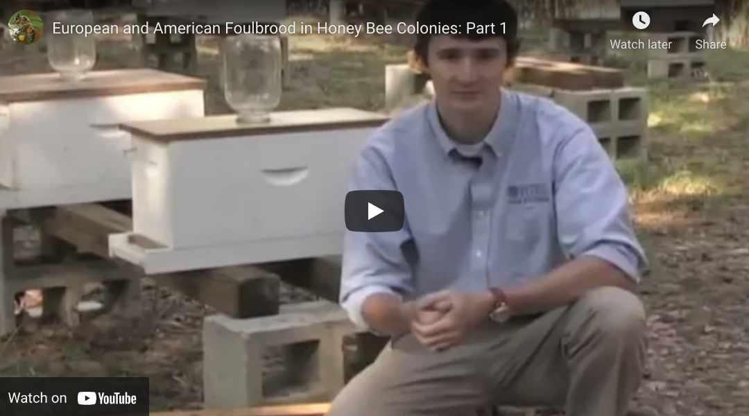 European & American Foulbrood (Youtube Video)