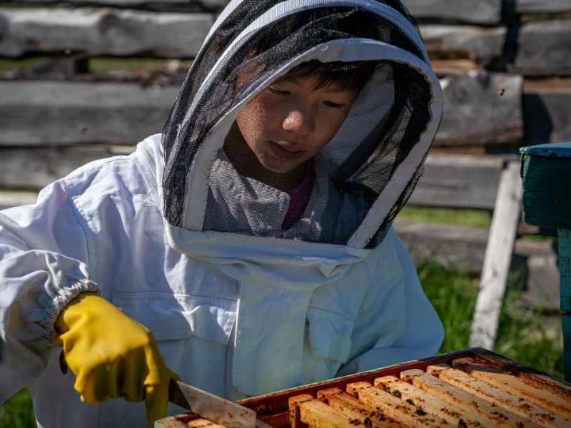 Kid Working Hive